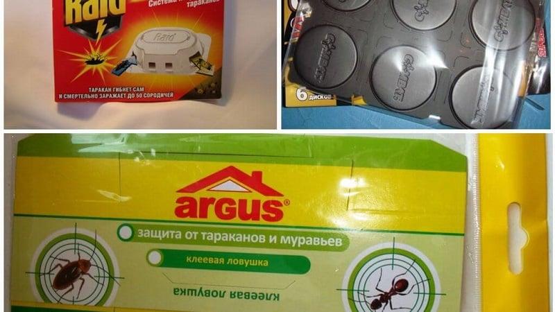 Как выбрать методы избавления от муравьев на кухне