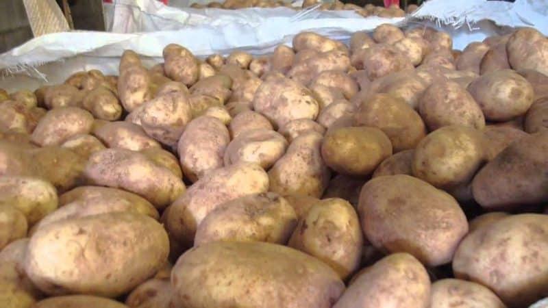 Хранение картошки в зимний период дома — как делать это правильно