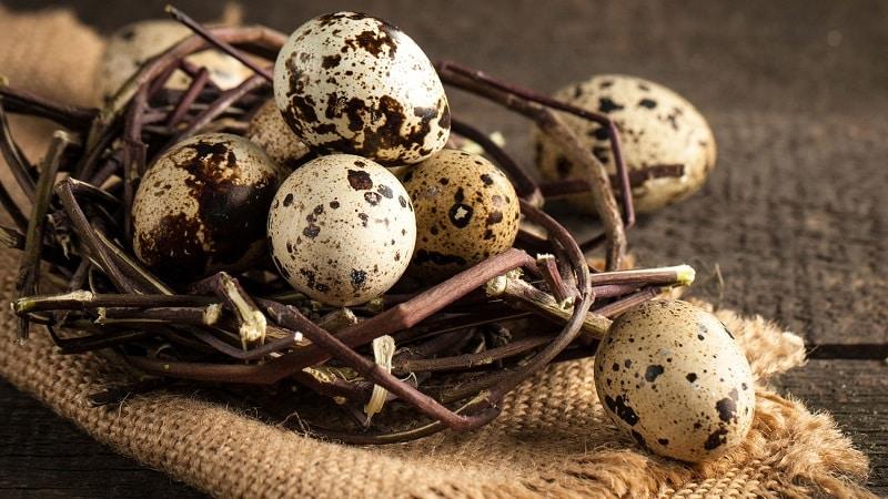 Хранение перепелиных яиц — способы и сроки