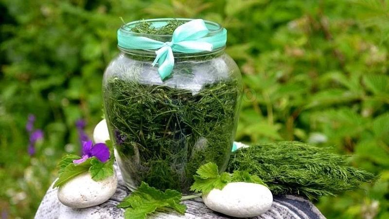 Как правильно хранить зелень свежей долго в домашних условиях