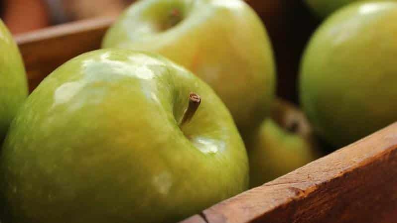 Правильное хранение яблок в домашних условиях