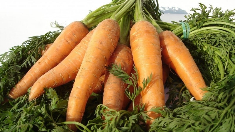 Способы хранения моркови на зиму в квартире