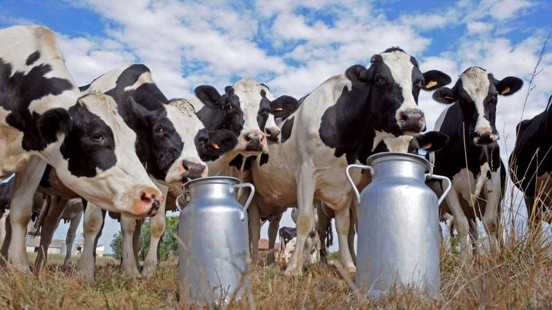 Какие сроки хранения у натурального и пастеризованного молока