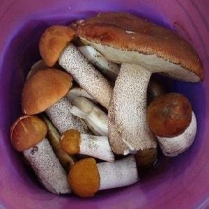Как хранить свежие грибы в домашних условиях