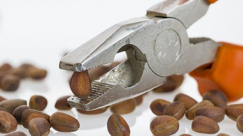 Хранение очищенных кедровых орехов дома — можно ли и на какой срок