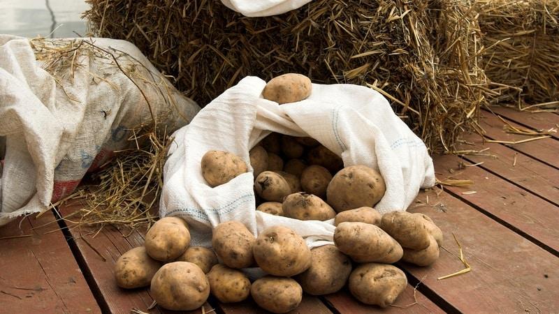 Какой приемлемый температурный режим для картофеля