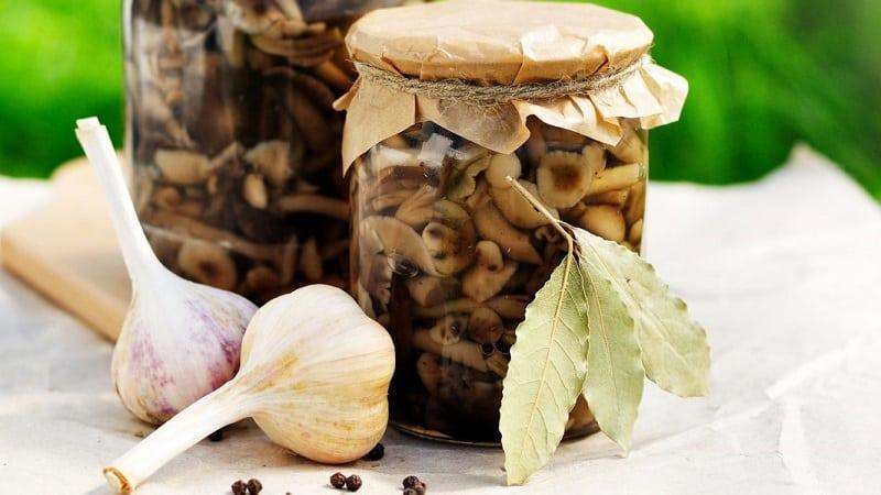Как хранить банку соленых грибов чтобы не появилась плесень