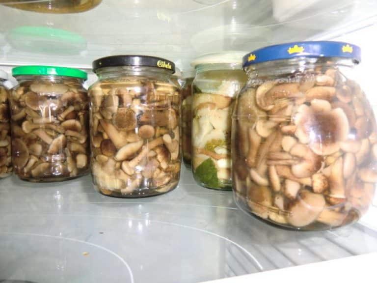 Сколько можно хранить грибы в холодильнике